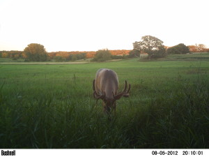Velvet Buck Trail Camera
