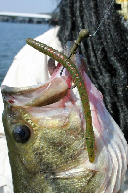 when bass lures fail go back to the rubber worm - morning moss, Hard Baits