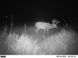 Big Buck Trail Cam