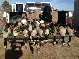 duck hunt opening day