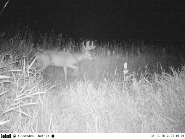 Big Buck Trail Cam photo