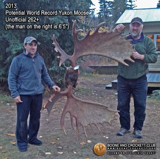 World Record Moose