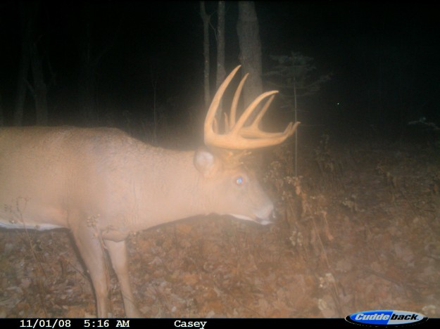 Setting Up Trail Cameras for Big Bucks