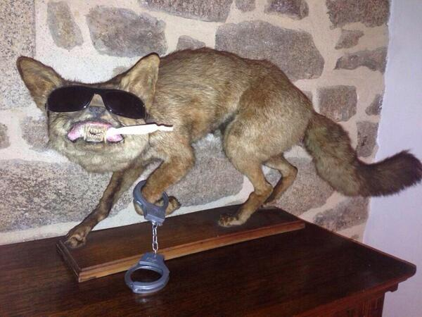 Worst Taxidermy Mounts Ever