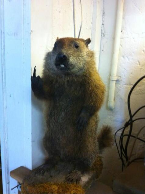 bad taxidermy mounts