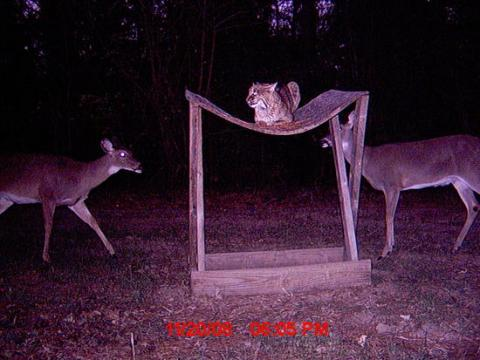 Funny Trail Cam Photo