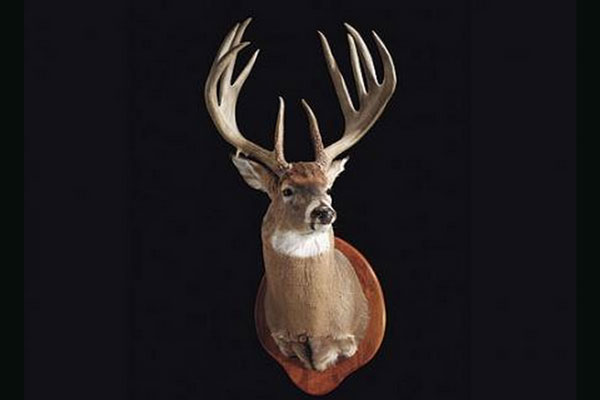 Top 10 Biggest P&Y buck all time