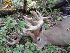MN Velvet Buck World Record