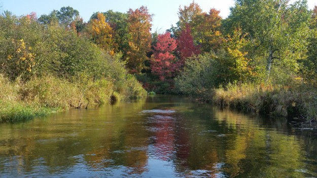 Autumn Trout Stream