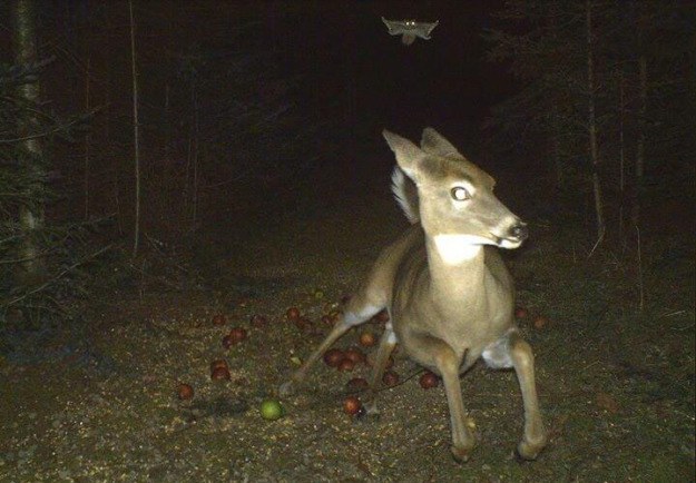 Scared Deer Pic