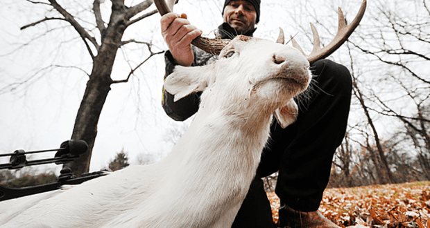 Albino buck shot in Missouri