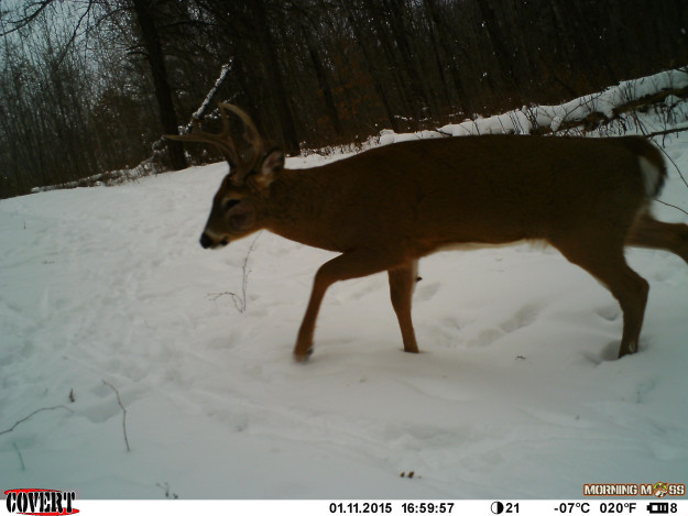 old buck picture
