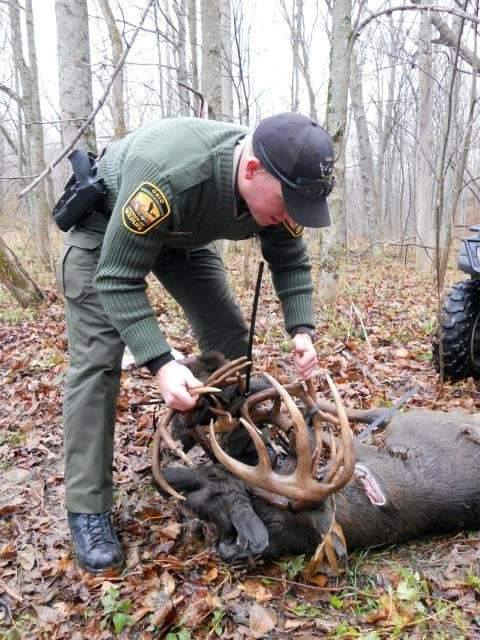 3 bucks locked and killed in river