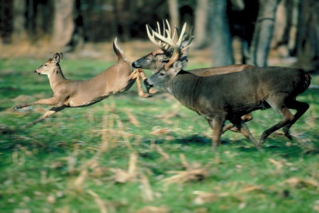 Best Days to Hunt Rut 2015